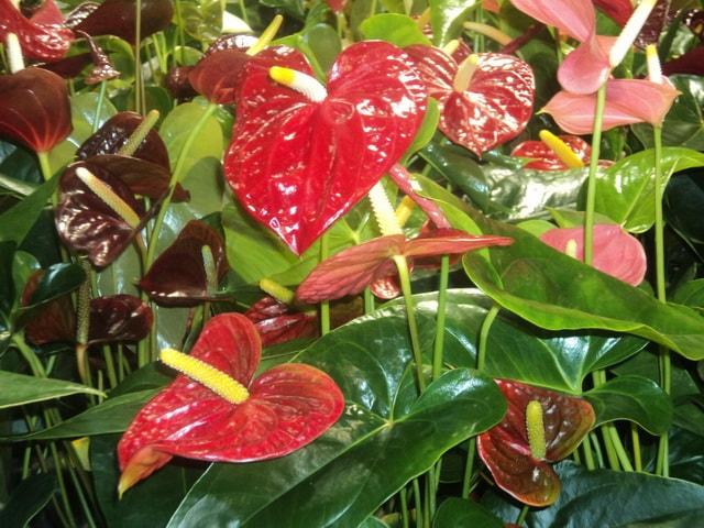 Цветок по середине с цветком таким же как и листья фото