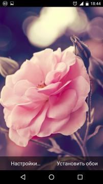 скачать живые картинки розы