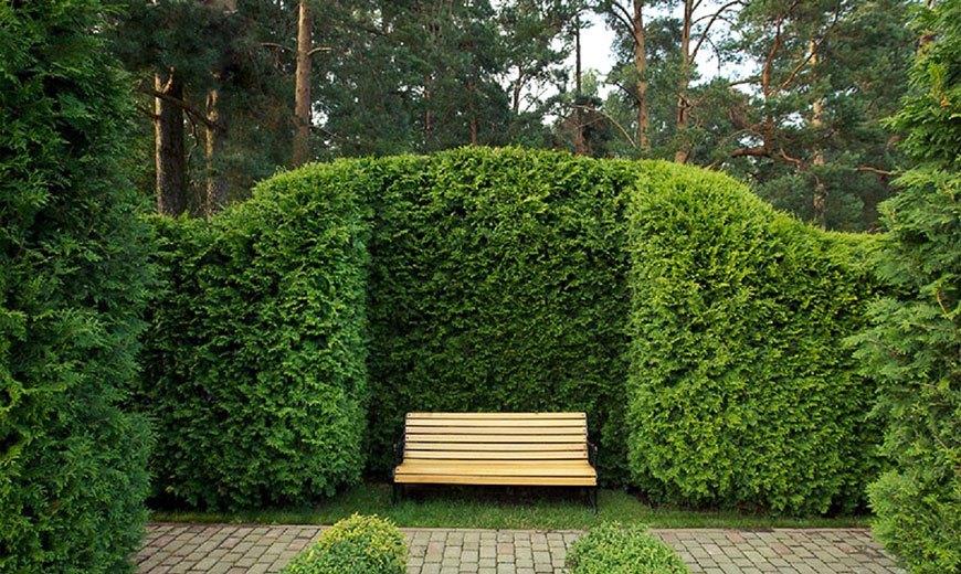 Nombres De Plantas De Artesania Arbustos Florecientes Plantas - Arbustos-para-vallas