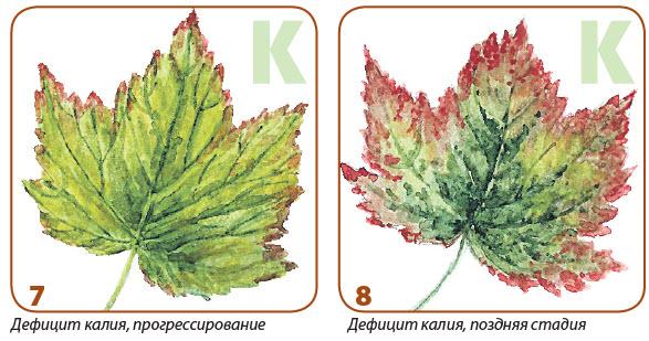 Определение  недостатка  питательных  веществ у растений