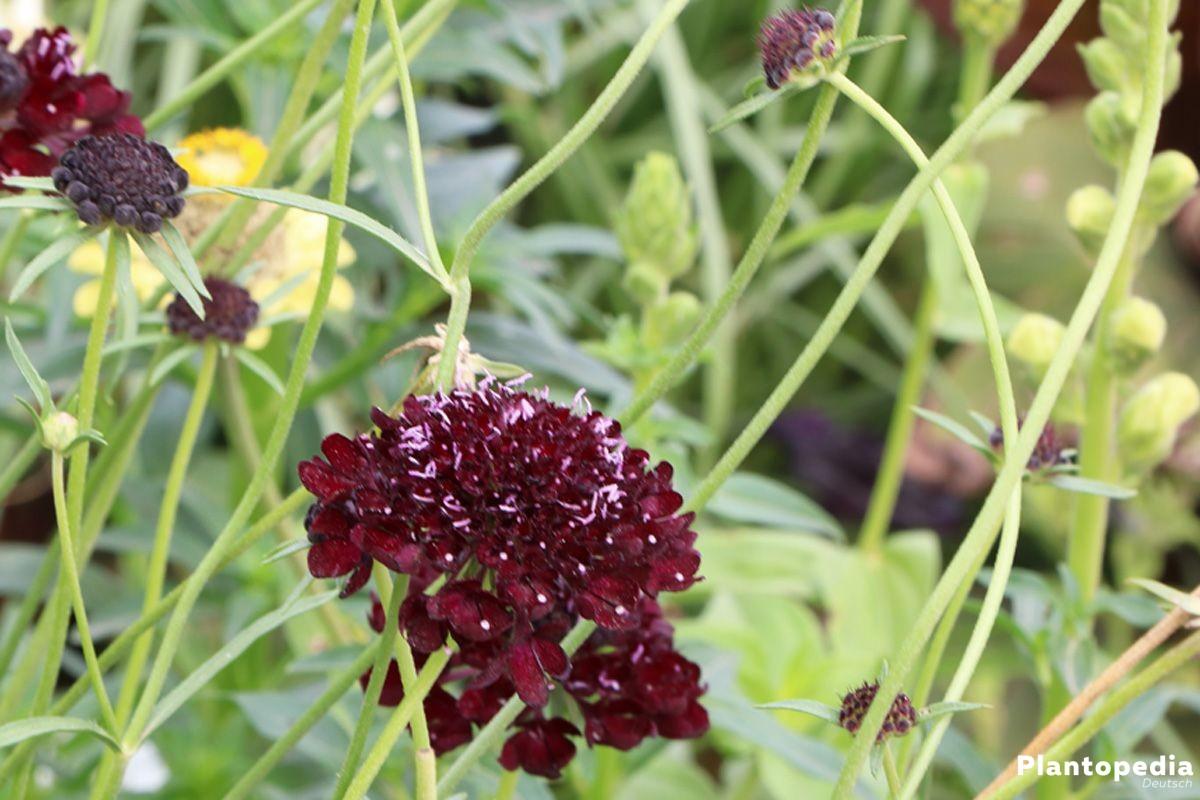 Kapalı çiçeklerin ortak zararlıları ve kontrolü