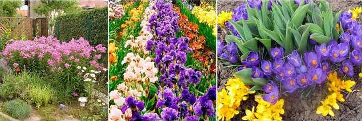 Фото красиво посаженных цветов 91