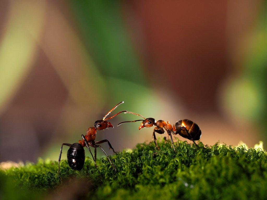 Las hormigas negras de jardín cómo deshacerse de los remedios ...