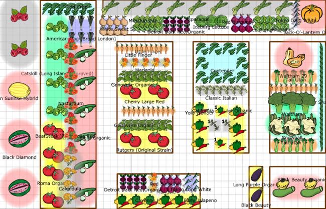 в схема овощей посадки огороде